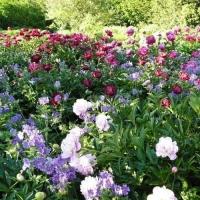 Многолетние травянистые растения