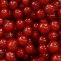 Cмородина красная Сахарная