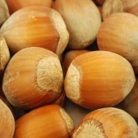 Орех Фундук Урожайный 80